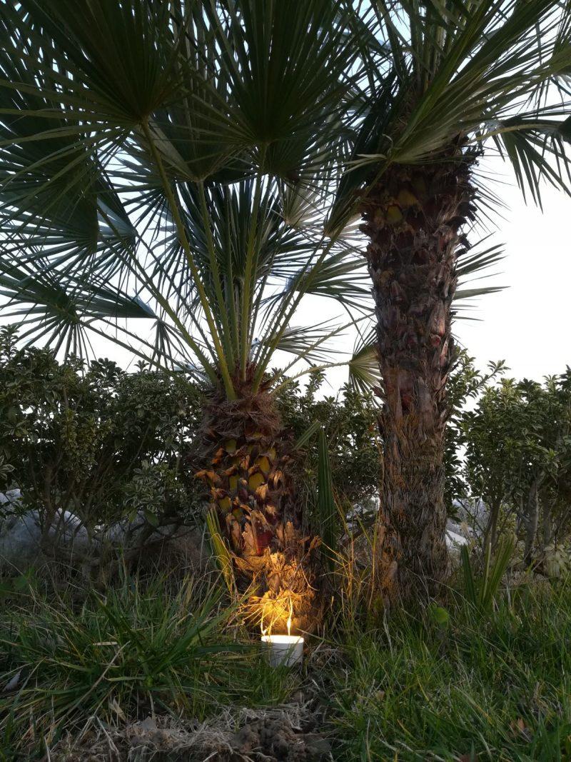 Faretto LED da Esterno per illuminazione coppia di palme