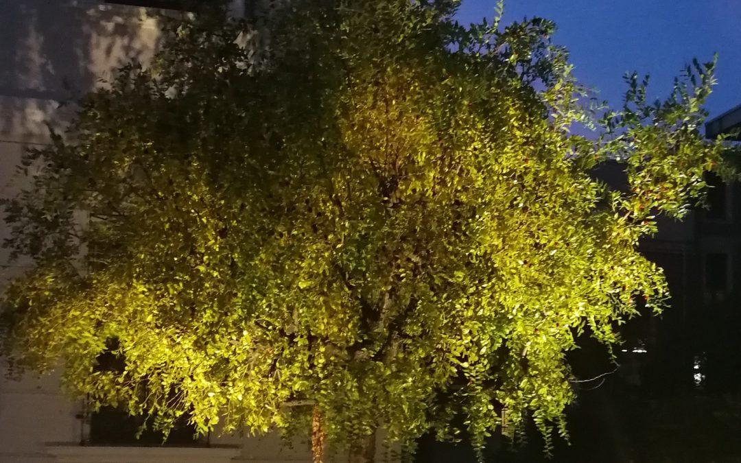 Come usare al meglio i Faretti per Illuminazione Alberi