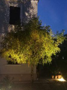 Faretti per Illuminazione Alberi